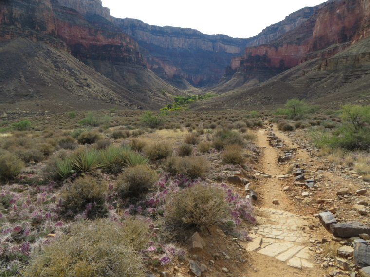 Looking back to Bright Angel Trail above Indian Garden, Plateau Point trail - © William Mackesy