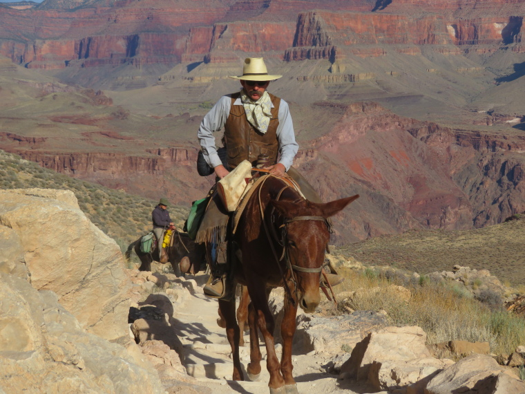 Crossing the Canyon : Hamming it up, South Kaibab Trail - © William Mackesy