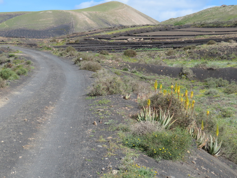 Spain Canary Islands: Lanzarote, La Geria; Montana Tinasoria , Beginning of GR 131 track, Walkopedia