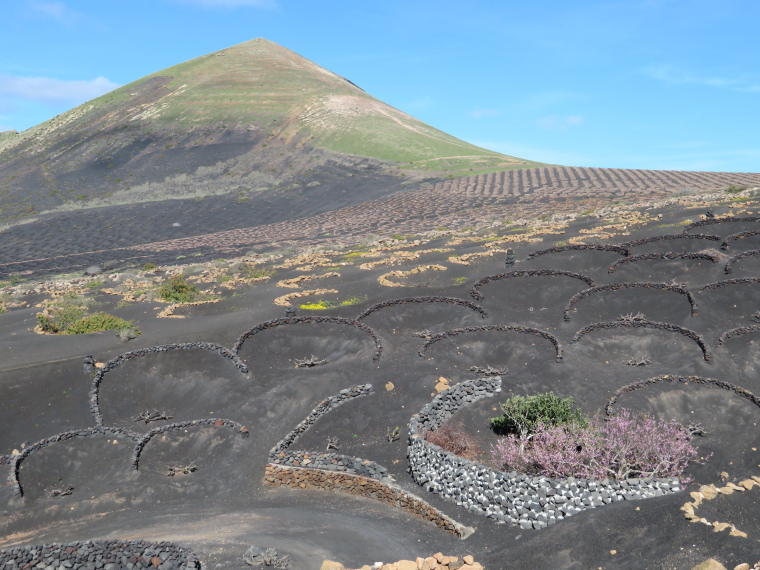 Spain Canary Islands: Lanzarote, La Geria; Montana Tinasoria , , Walkopedia