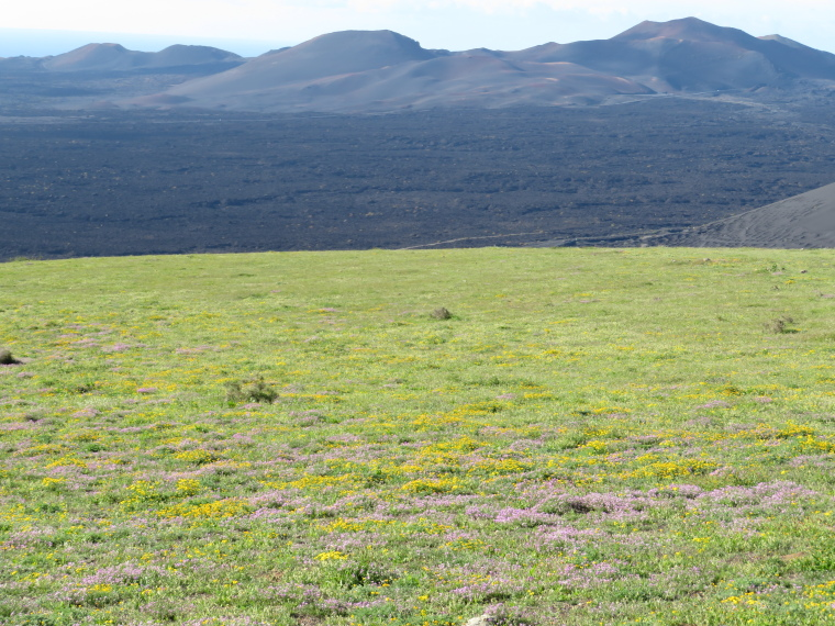 Spain Canary Islands: Lanzarote, La Geria; Montana Tinasoria , North over lava fields from Tinsoria summit top meadow, Walkopedia
