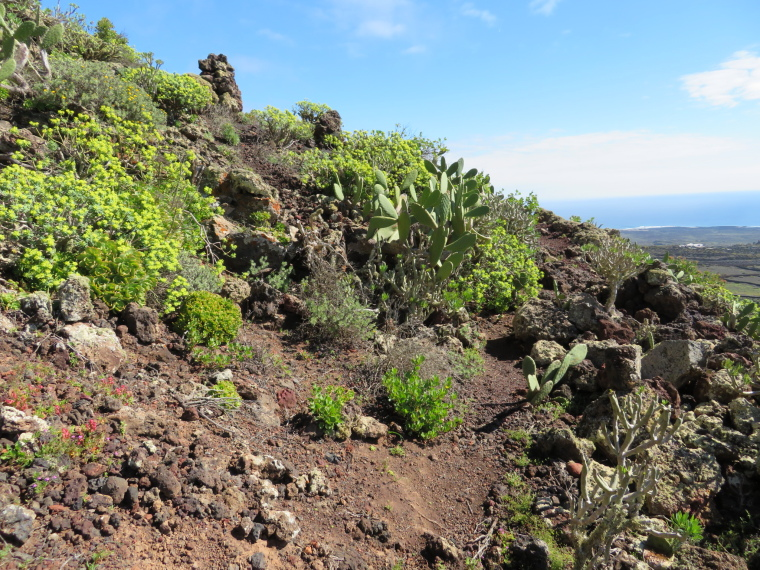 Spain Canary Islands: Lanzarote, Maguez Area  , Vegetation on Corona flank, Walkopedia