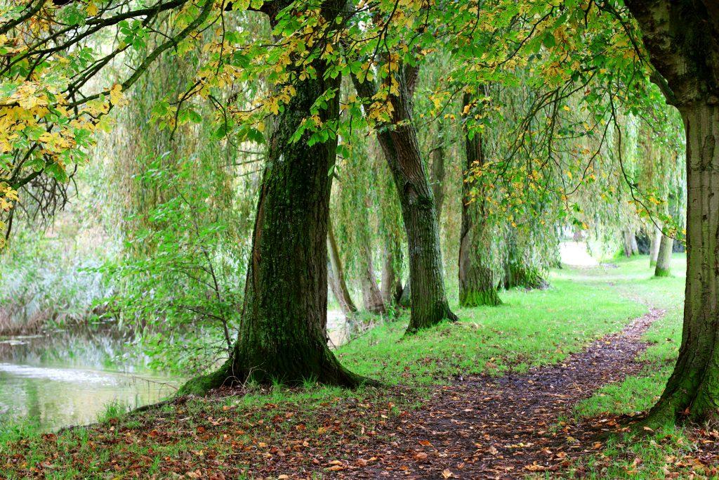 United Kingdom England South, Winnall Moors, Nature UK, Walkopedia