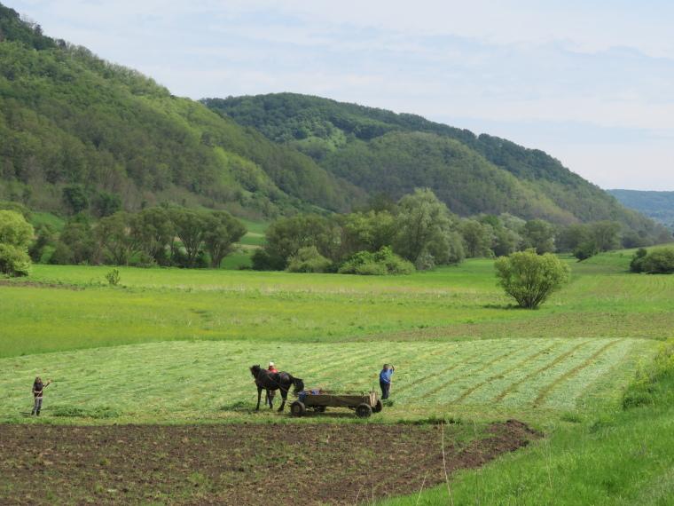 Transylvania: Traditional agriculture, Copsa mare - © William Mackesy