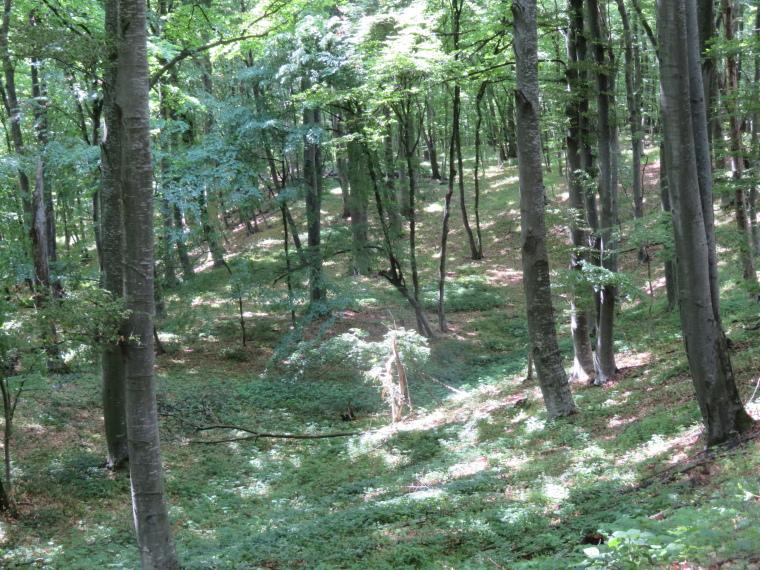 Romania Transylvania, Transylvania, Forest above Roades, Walkopedia