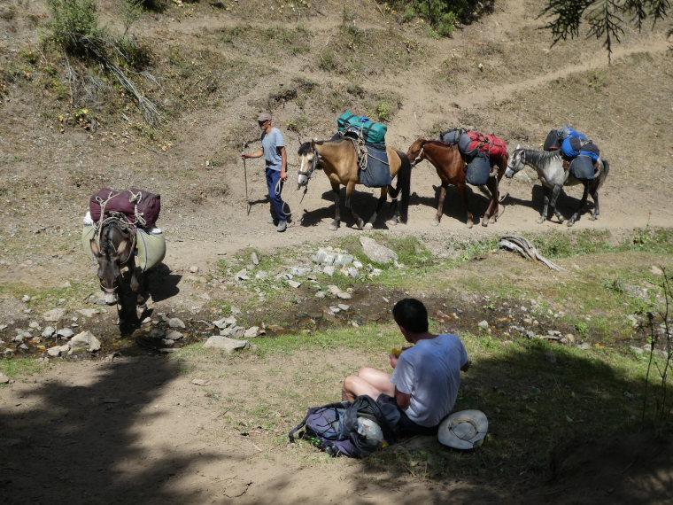 Kyrgyzstan, Pamir-Alai Mountains, Baggage horses, Walkopedia