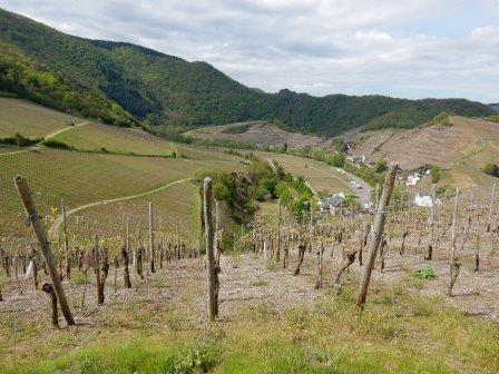Germany, Along the Ahr-river, Rotweinwanderweg , The Rotweinwanderweg - vineyards, Walkopedia