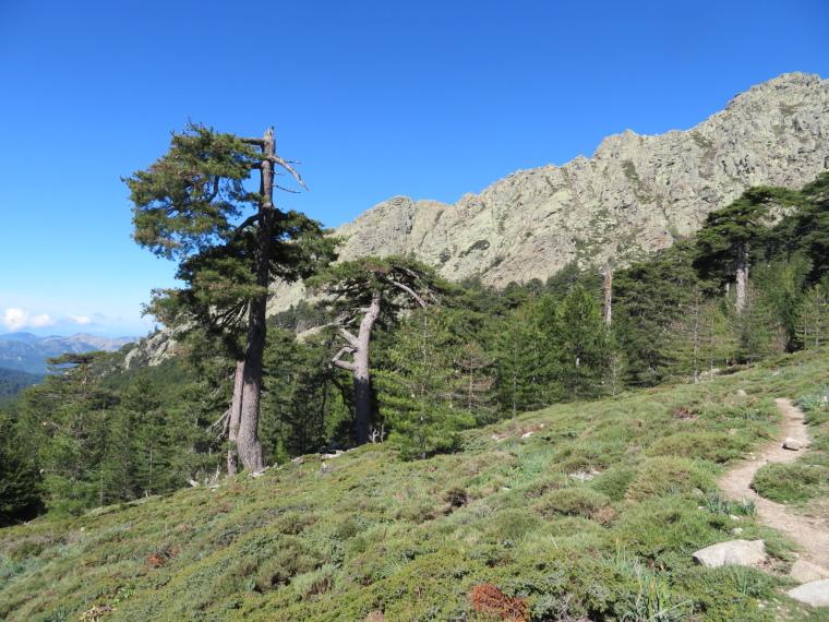 Evisa to Col de Vergio: Lovely meadow just above Aitone forest treeline - © William Mackesy