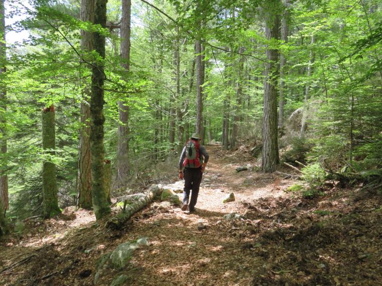 Evisa to Col de Vergio: © William Mackesy