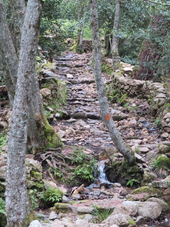 Evisa to Col de Vergio: Old mule trail - © William Mackesy
