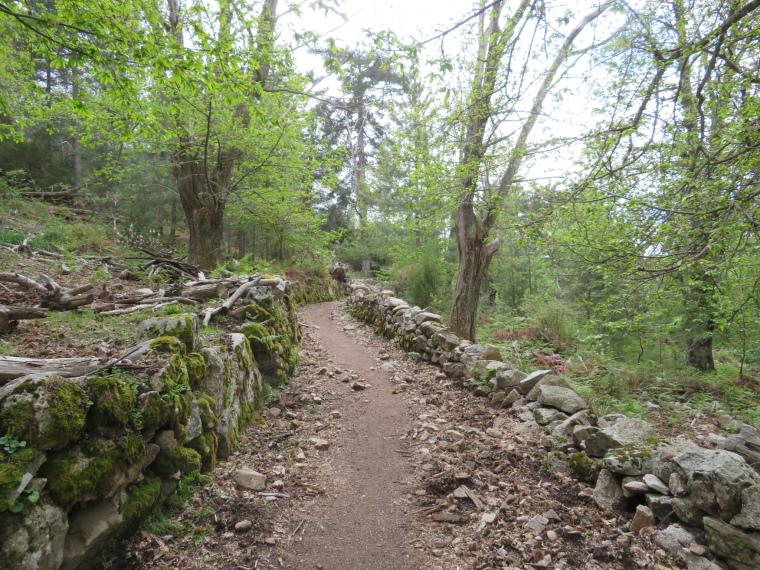 Evisa to Col de Vergio: Ancient way through walnut groves - © William Mackesy