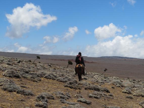 Sanetti Plateau: Vast plateau - © William Mackesy