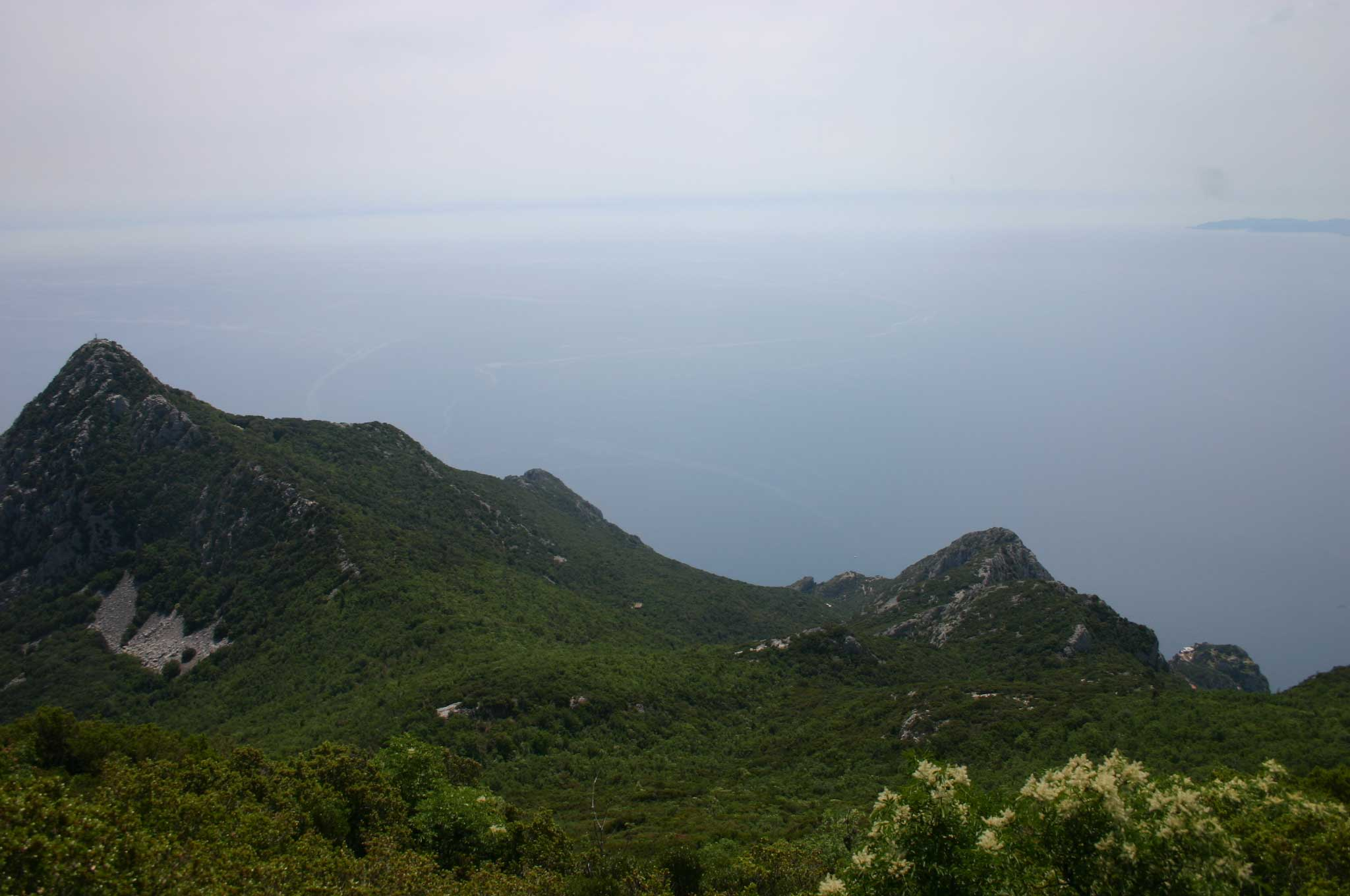 Mt Athos - ? From Lower Slopes - © William Mackesy