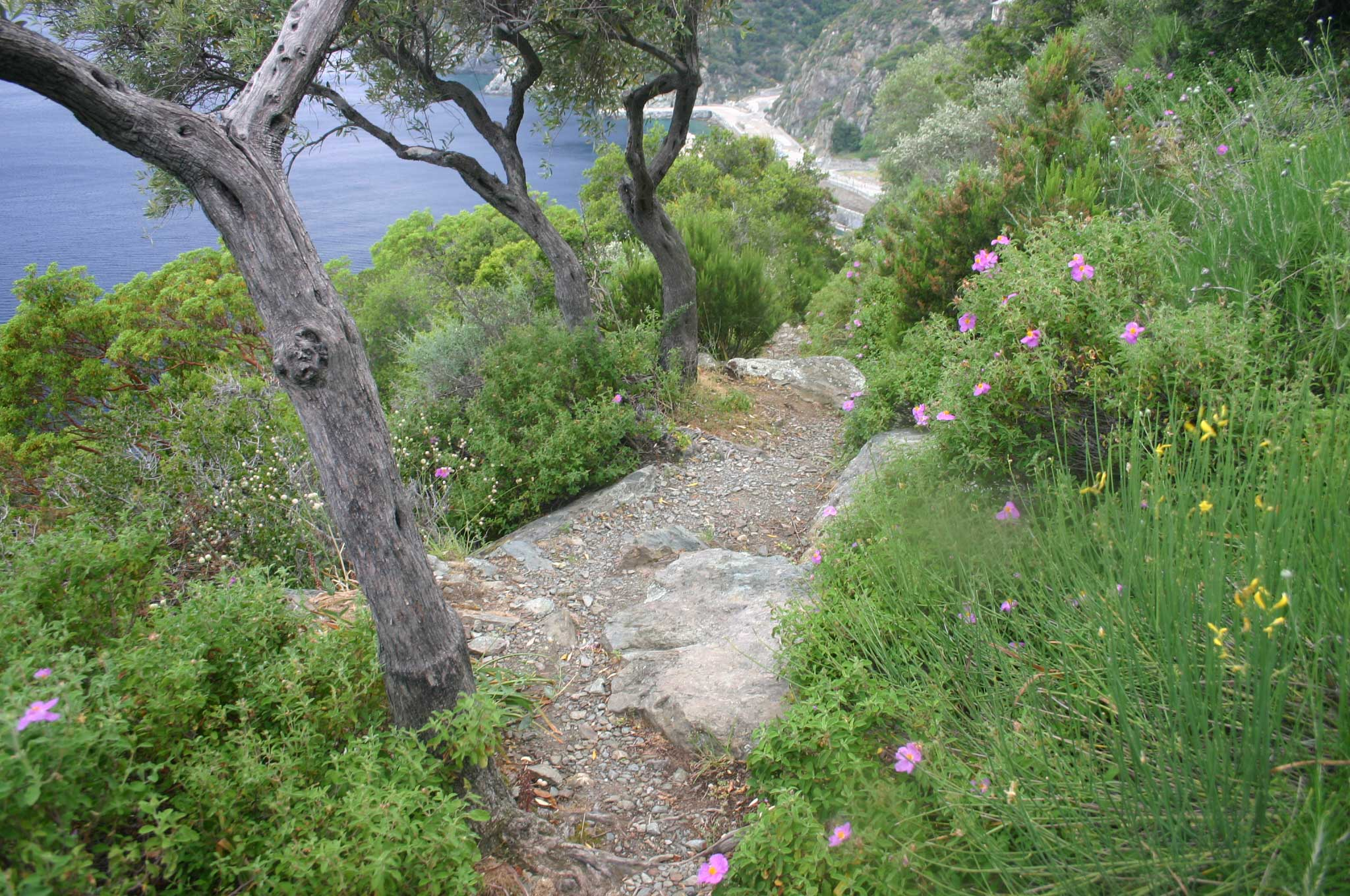 Mount Athos: Mt Athos - West Coast Path - © William Mackesy