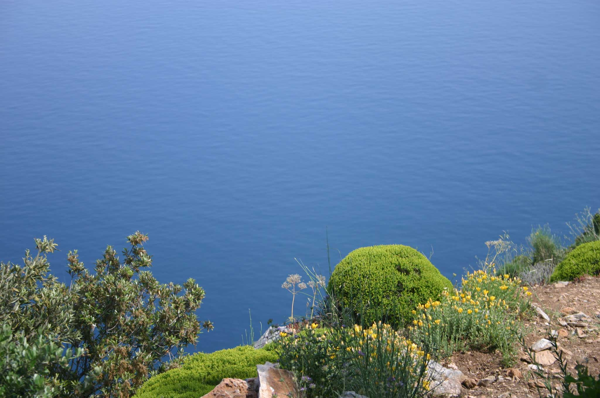 Mount Athos: Mt Athos - South coast vegetation - © William Mackesy