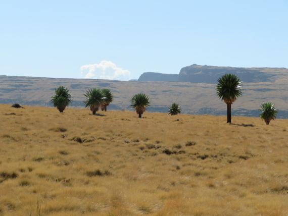 Ethiopia Simien Mts, Imet Gogo, On Imet gogo walk, Walkopedia