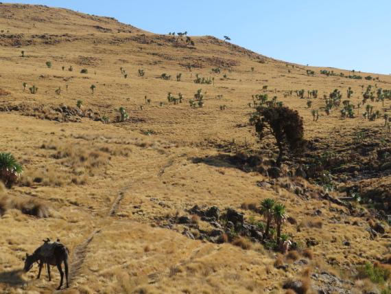 Ethiopia Simien Mts, Imet Gogo, Setting off from Geech, Walkopedia