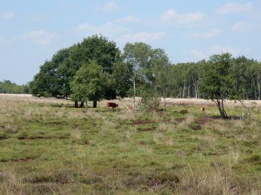 Sweden Jamtland, Jamtland, heatland on the Noaberpad, Walkopedia