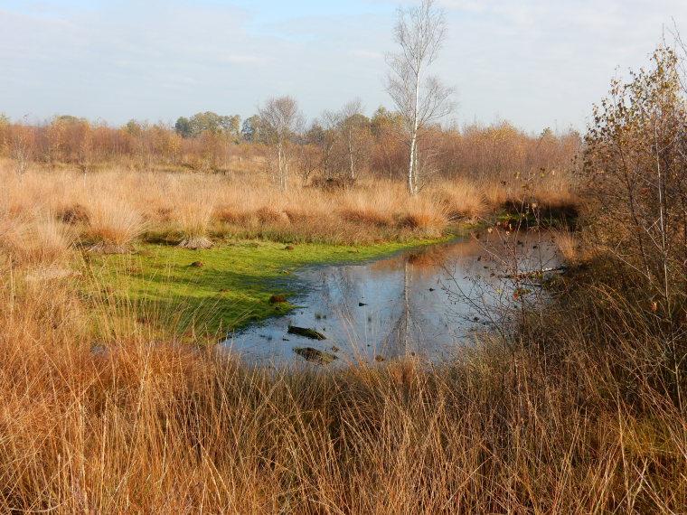 Netherlands East, Twentepad,  Peat moorland, Walkopedia
