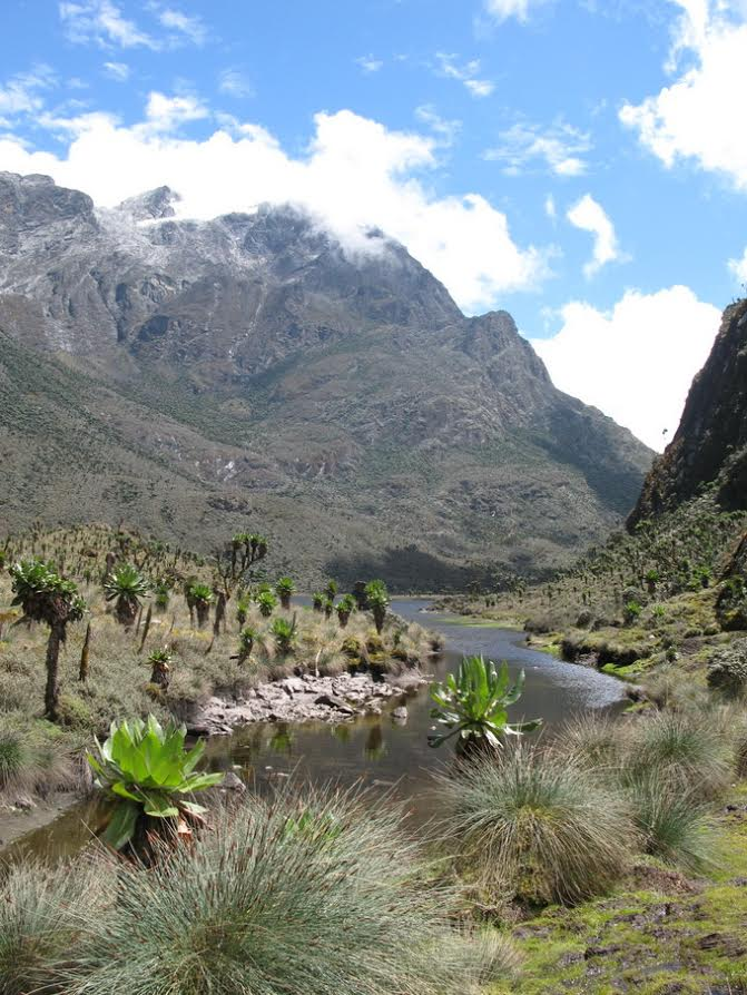 Rwenzori Mountains: Nr Bujuku Lk-1st view of Margherita  - © Charles Bookman