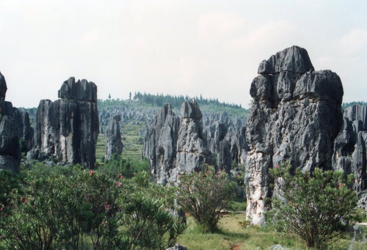 Stone Forest - © Copyright William Mackesy