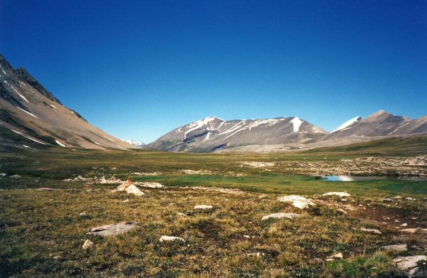 Canada Alberta: Jasper NP, Wilcox Pass, Wilcox Path Hike, up by the pass, Walkopedia