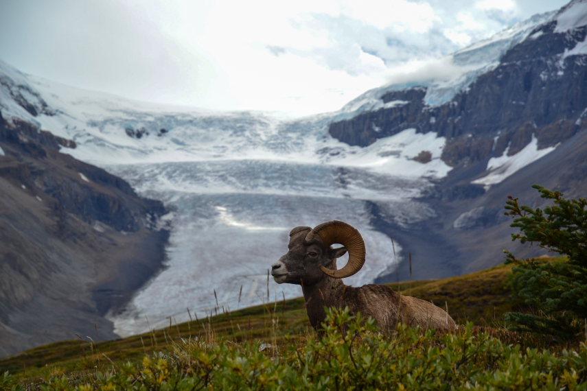 Wilcox Pass: Rockies - © Flickr user ilya_ktsn