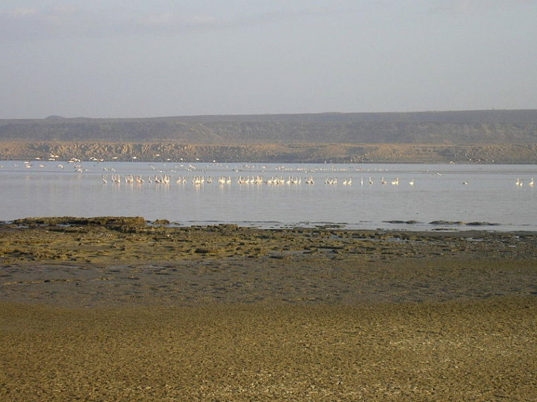 Lac Abbe: Flamingos  - © Wikicommons user Cjulien21