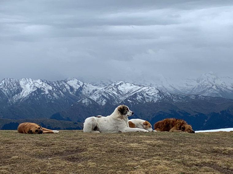Georgia Gt Caucasus Svaneti, Svaneti Region, Koruldi Lakes , Walkopedia