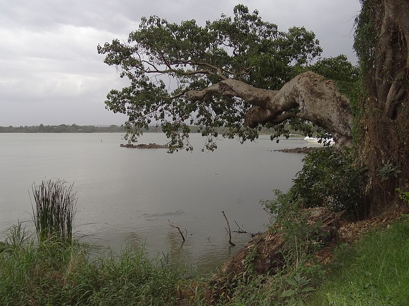 Zege Peninsula, Lake Tana: View from Shore of Lake Tana  - © Wikimedia user Adam Jones