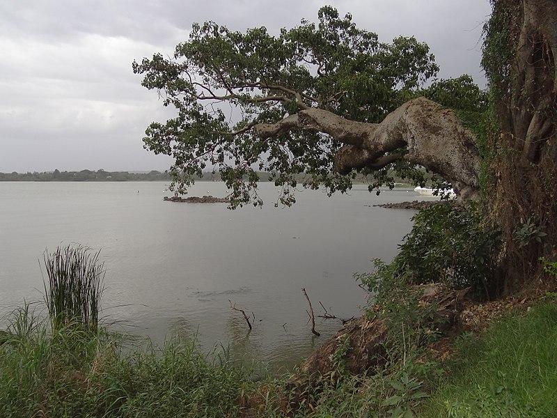 View from Shore of Lake Tana  - © Wikimedia user Adam Jones