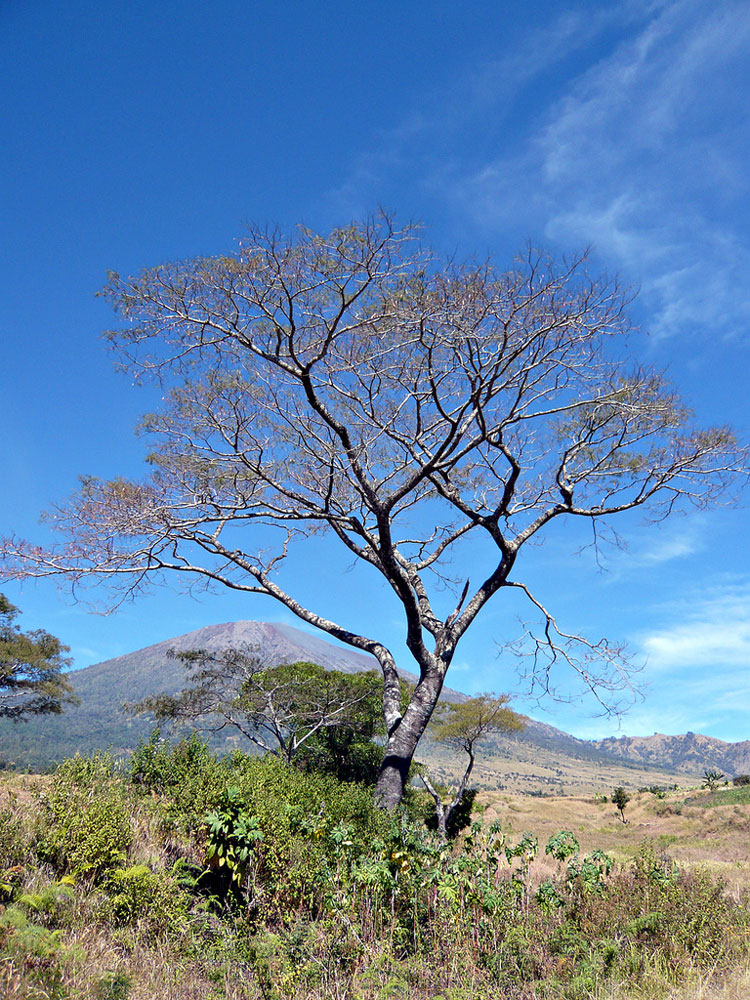 Mount Rinjani: Rinjani Photo Traveler's Note - ? From Flickr user Sektordua