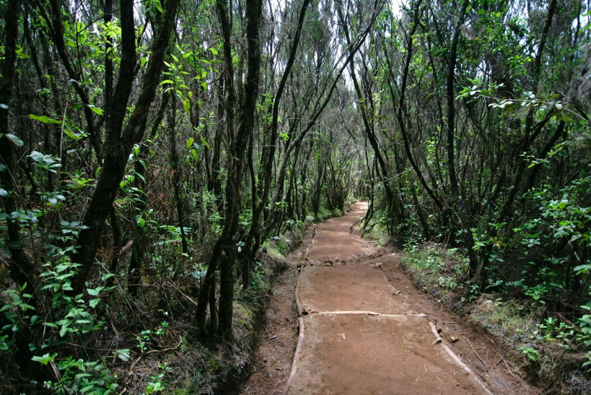 Tanzania Mount Kilimanjaro, Marangu Route , First day of Marangu Route trail, Walkopedia