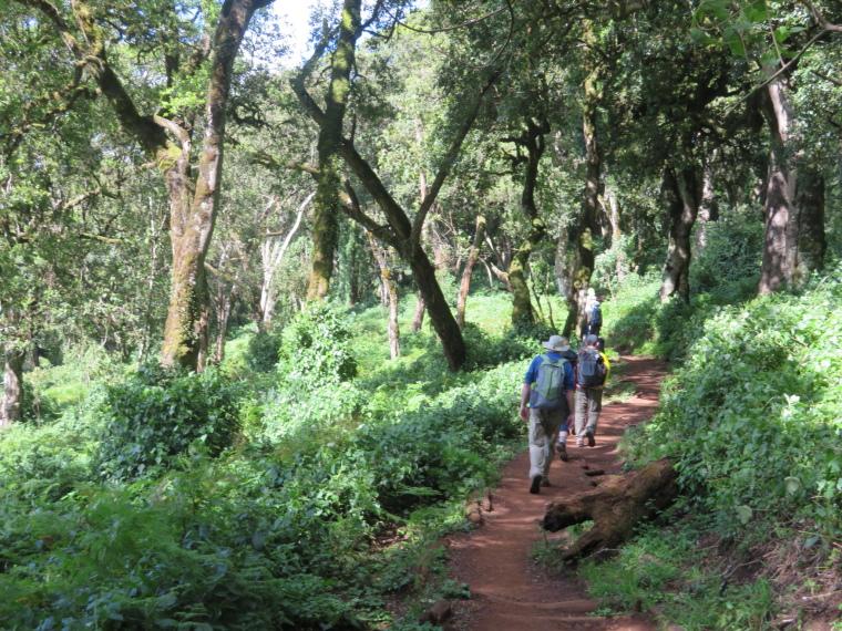 Lemosho and Shira Routes  : Lower forest - © William Mackesy