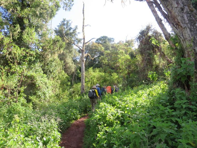 Lemosho and Shira Routes  : Day 2 Forest - © William Mackesy