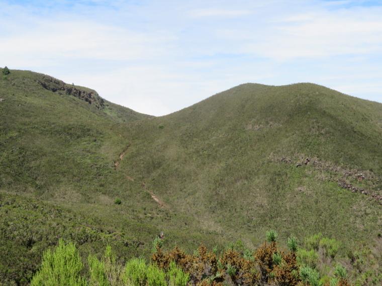 Lemosho and Shira Routes  : Day 2, giant heather hillsides - © William Mackesy
