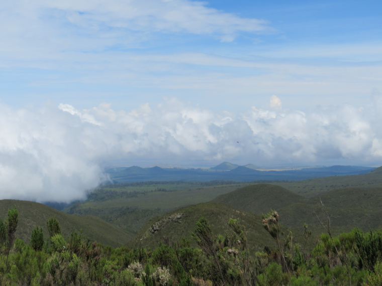 Tanzania Mount Kilimanjaro, Lemosho and Shira Routes  , Day 2, back down over giant heather hillsides. Cloud from south just stops, Walkopedia