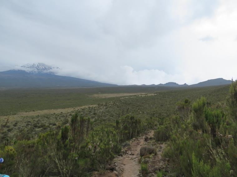 Lemosho and Shira Routes  : Day 2, Shira plateau - © William Mackesy
