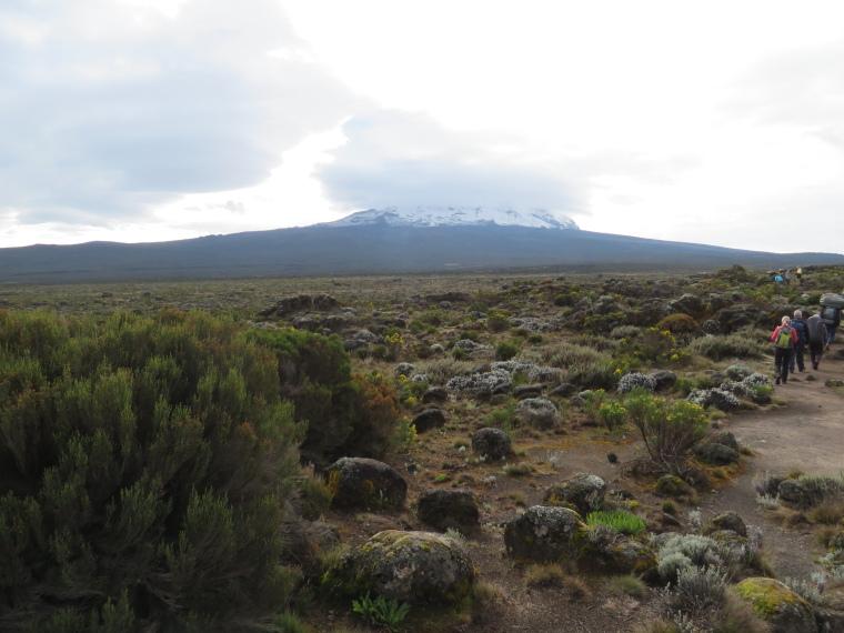 Lemosho and Shira Routes  : Day 3, Shira Plateau - © William Mackesy