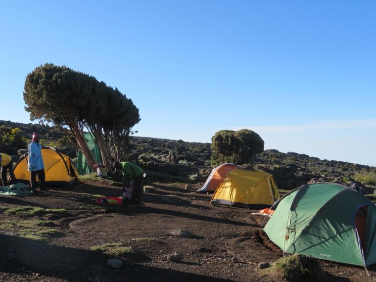 Lemosho and Shira Routes  : Shira 2 camp - © William Mackesy
