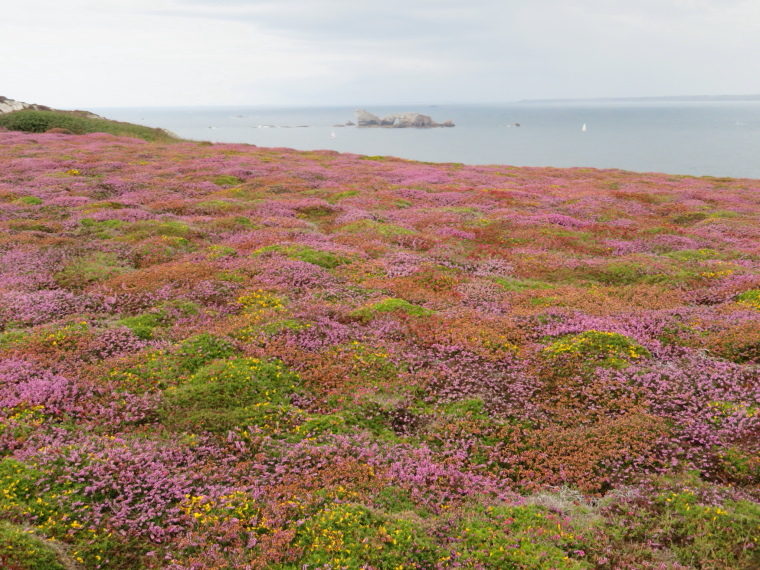 France Brittany, GR34, Crozon  vegetation, Walkopedia