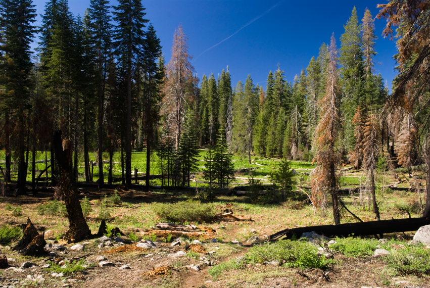 USA California Yosemite, Hetch Hetchy Area, Beehive meadow , Walkopedia