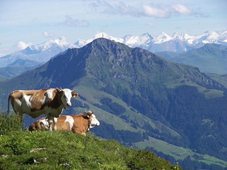 Austria Kitzbuheler Alps, Kitzbuheler Alps , Kitzbueheler Horn , Walkopedia