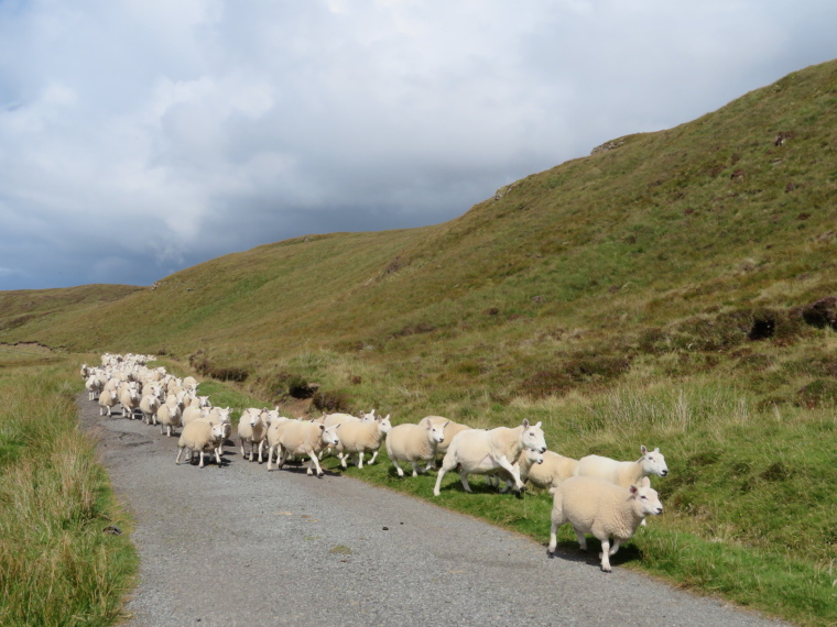 NW Capes and Cliffs: Traffic Jam - © William Mackesy