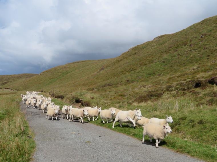 United Kingdom Scotland Isles Skye, NW Capes and Cliffs, Traffic Jam, Walkopedia
