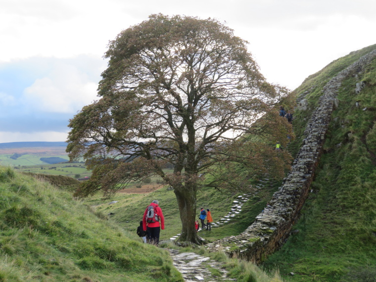United Kingdom England Hadrian's Wall, Sewingshields to Cawfields, Sycamore Gap, Walkopedia