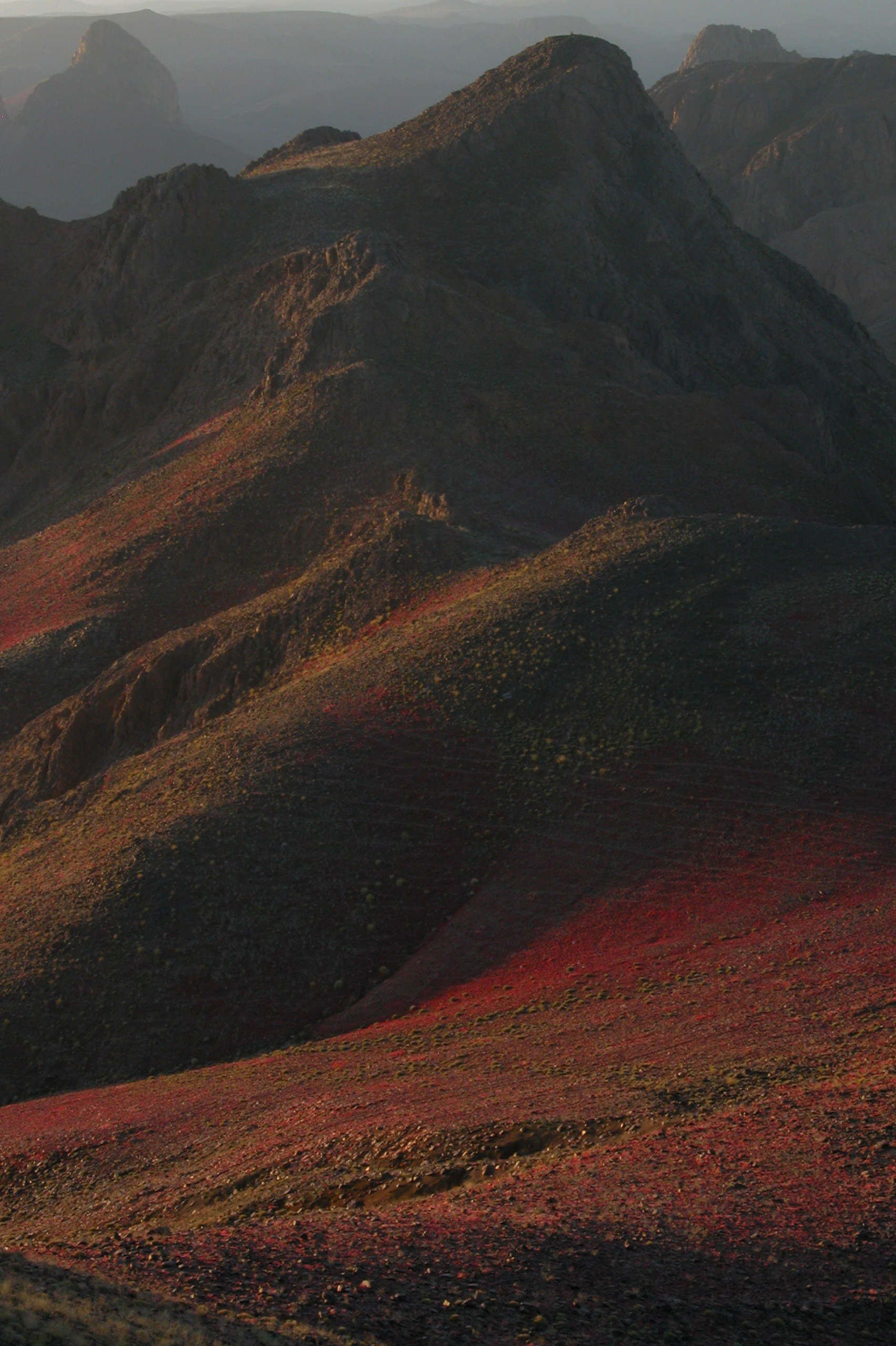 Algeria South, Hoggar Mountains, Flowers in the Hoggar Mountains, Walkopedia