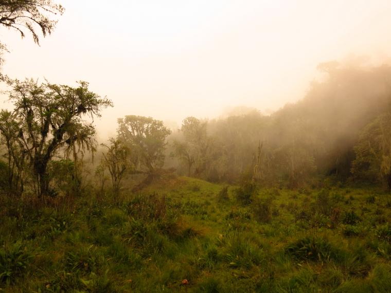 Rwanda, Virunga Mountains,  Climbing Karisimbi, Walkopedia