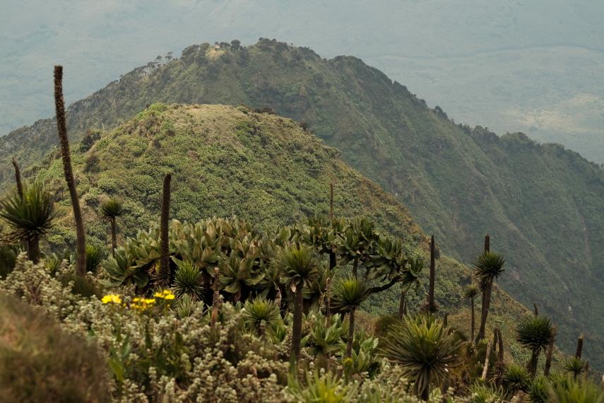 Rwanda, Virunga Mountains, Three Peaks Mt Sabyinyo, Walkopedia