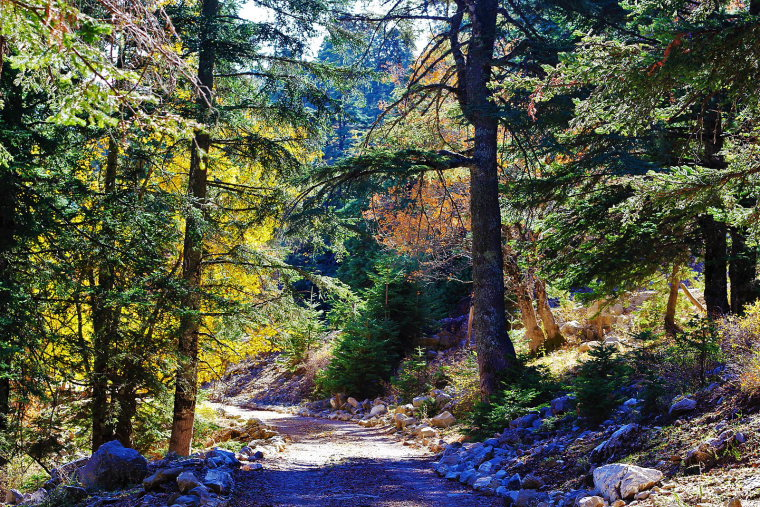 Talassemtane National Park  - © wiki user Tahamaaroufi